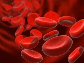 Do hemoglobin levels drop during menstruation?