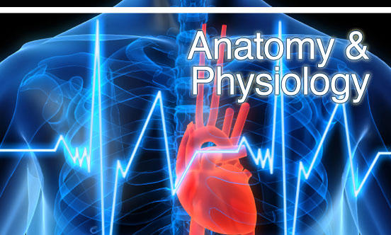 What are the best websites to learn anatomy and physiology?