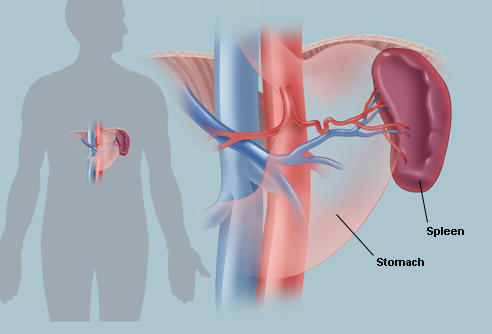 Ruptured spleen recovery time Things You Didnt Know