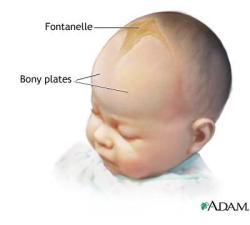 Is it normal for 1 year old and 2 month baby s fontanel to close because my nephew s fontanel is already closed and is it effect tooth formation?