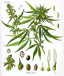 I have 1 week to get weed out my system i smoked 2 bowl s of weed enough to have in my system i need 2 get all of it out fast what can I do.?