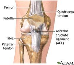 For what reason is the patellar tendon used in reconstructing the acl?