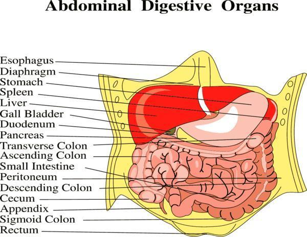 "On average, how long does food take to move through the digestive tract? Are there any foods that are prone to getting ""stuck"" and causing upset?"
