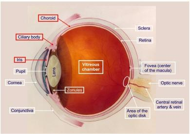 What is a pediatric uveitis?