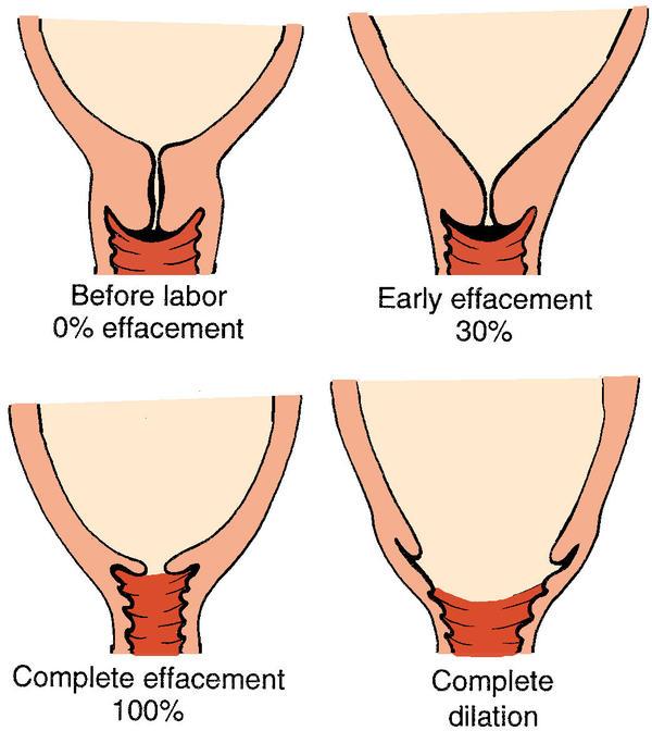 Цервикальный канал норма при беременности 20