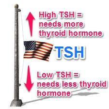 On syn. 50 mcg labs are: TSH 4.45; rt3 23.3; T4 10.4; t3uptake 30; free T3 3.1; triiodothyronine T3 121. Increase synthroid (thyroxine)? Don't sleep, fast heart.