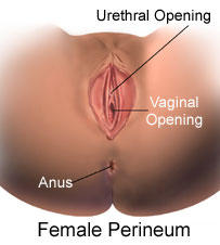 Split in perineum after sex