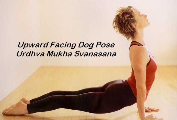 What muscle does the upward dog pose work out?