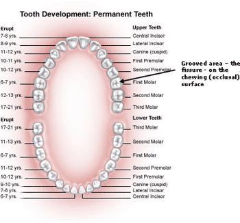 Description Of The Mouth 53