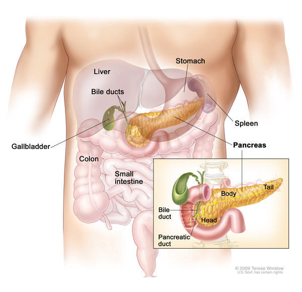 Where in the body is the pancreas located?