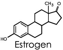What are common symptoms of high levels of estrogen in women?