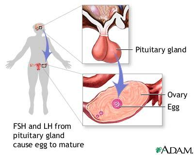 What is the definition or description of: luteinizing hormone?
