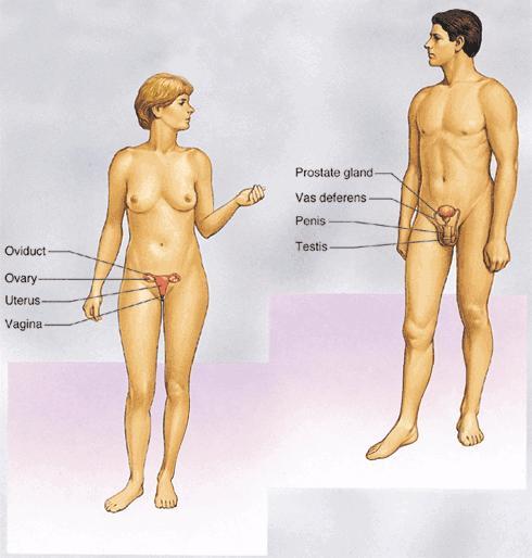 zhenskaya-fiziologiya-i-seks