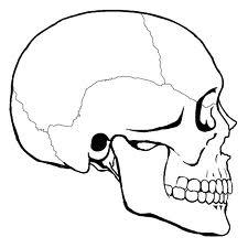 Compared to the skull bone outside, how easily the palate bone be broken if the health care providers used too much force inside the mouth?