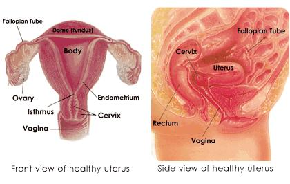 How you know if your uterus is normal?