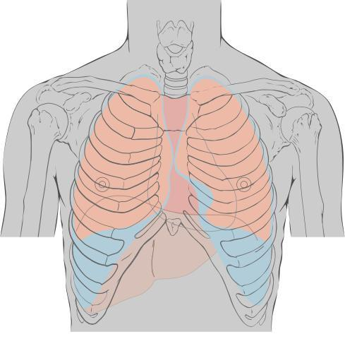 Sharp pain in middle of my chest or upper abs. Hurts to cough & sneeze. Tender to touch. Just below sternum. Causes shortness of breath & lightheaded.