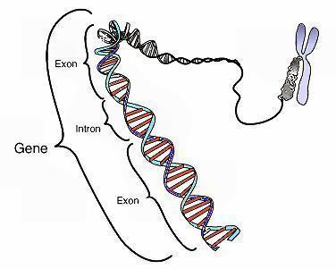 Is fibromyalgia genetic?