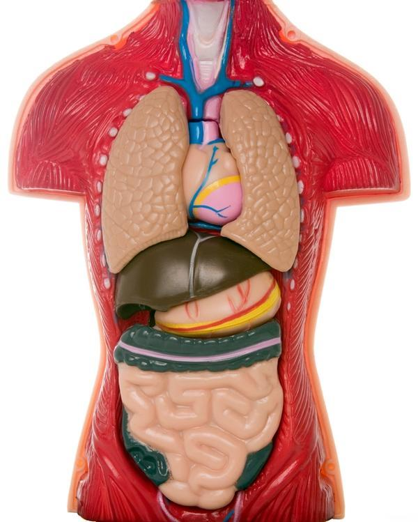 Can getting a pancreas transplant cure type 1 diabetes?