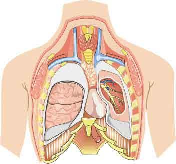What is the definition or description of: thoracic surgery?
