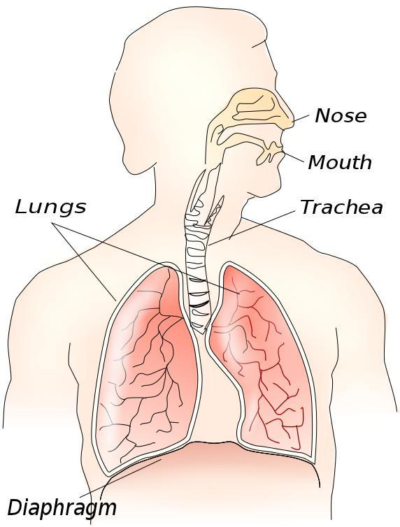 How dangerous is respiratory anthrax nowadays?