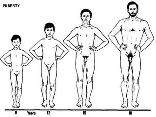 What are the stages of puberty for a male?