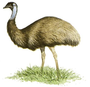 Does emu oil help in fighting hair loss?