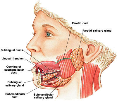 How many days accur parotid glands swelling?