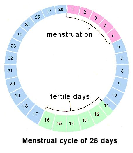 When is the best time of cycle to conceive a girl?