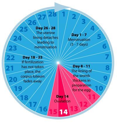 How many days after ur period do you ovulate ... Can u ovulate 8 days before period?