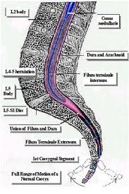 What can cause pain in tailbone while sitting n chair esp with movement. Like a knife being run up and down.