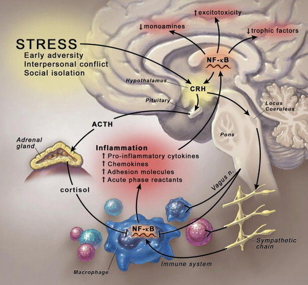 Is there any evidence that major depression causes inflammation in various areas of body?