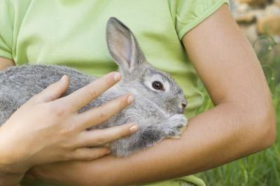 Is it possible to get hives from simply holding a new pet rabbit?