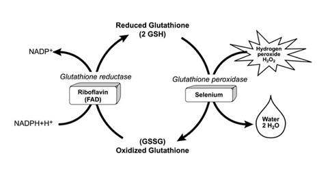 What is glutathione and what is it used for?