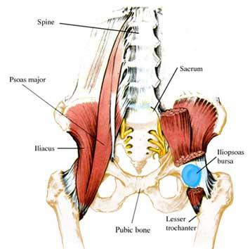 hip flexor pt sporting activities