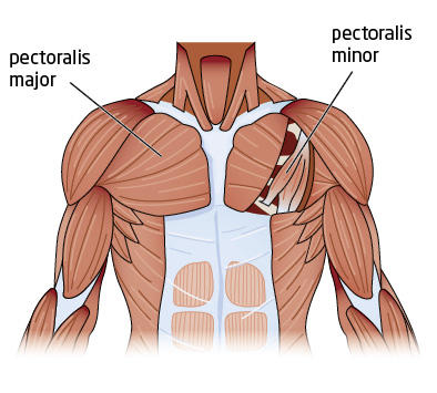 i have a pain in the center of my chest - learn from doctors on, Cephalic vein