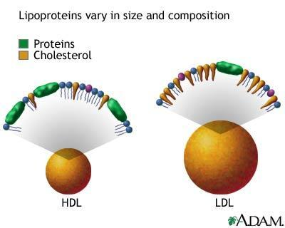 What are the effects of having high cholesterol?