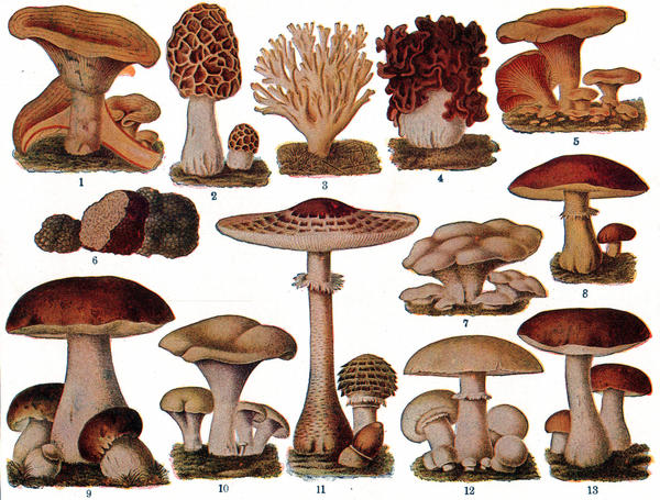 What are risks of experimenting with shrooms?