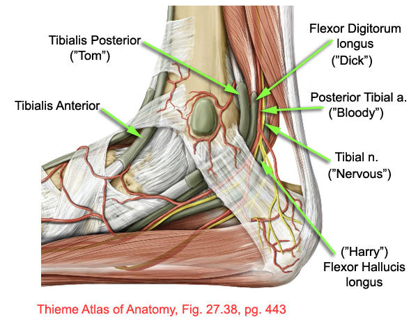 What is tarsal tunnel?