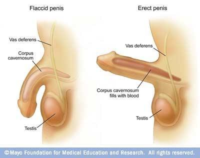 How Can U Improve Penis Length And Width - Doctor insights on ...