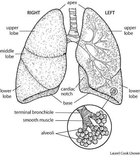 How does air get trapped in the lungs? What would happen?