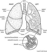How does air get trapped in the lungs? What would happen