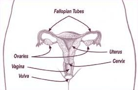 Is hysterectomy needed if left fallopian tube wrapped around my left ovary since its happened in 2009 and had a larposcopy done and it's back?