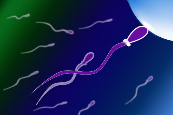 Can you recommend any Ayurvedic medicines to increase sperm rate?