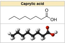 Which is the best recommended plant based caprylic acid?