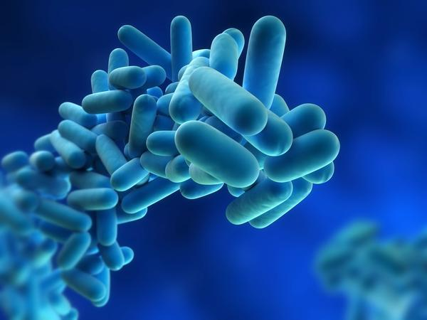 What causes legionnaires disease?