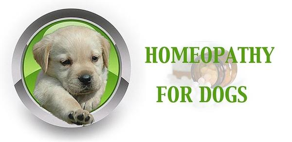 Any homeopathic or natural treatment for heartworm die-off?