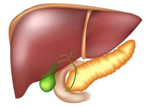 What can be found in a liver biopsy?