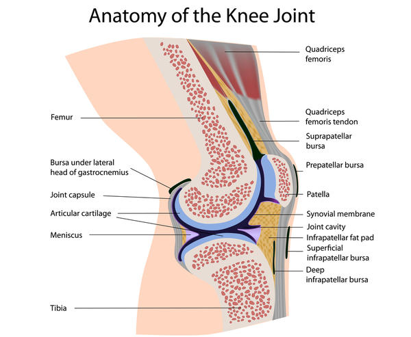 What is the main function of the joint capsule?