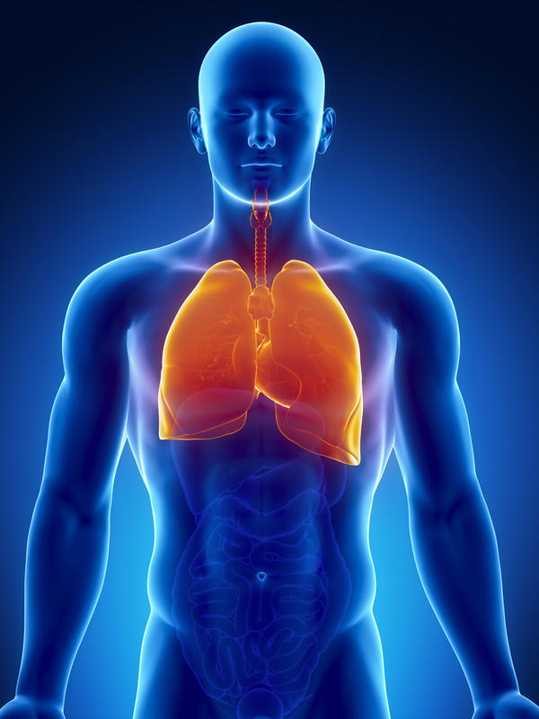 Where are your lungs in your body located?