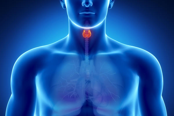 How long after the thyroid stops working correctly before the body starts showing symptoms?